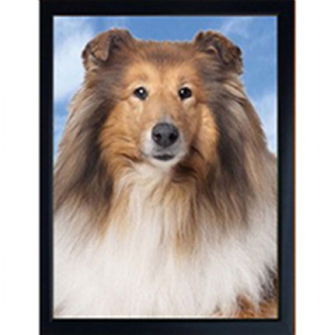 ROUGH COLLIE 3D FRIDGE MAGNET